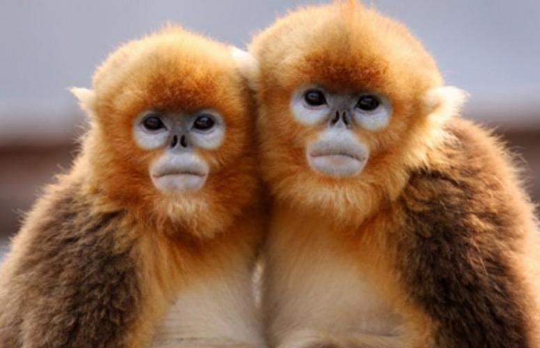 """都知道人脸识别,但你听说过""""猴脸识别""""吗?"""